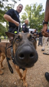University Police K9 Dios greets students during Coffee with a Cop on the Union plaza. Photo by Thomas Graning/Ole Miss Communications